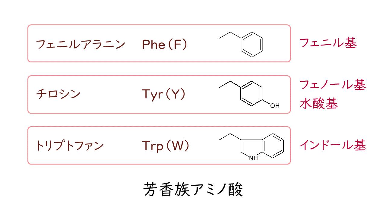 族 アミノ酸 芳香