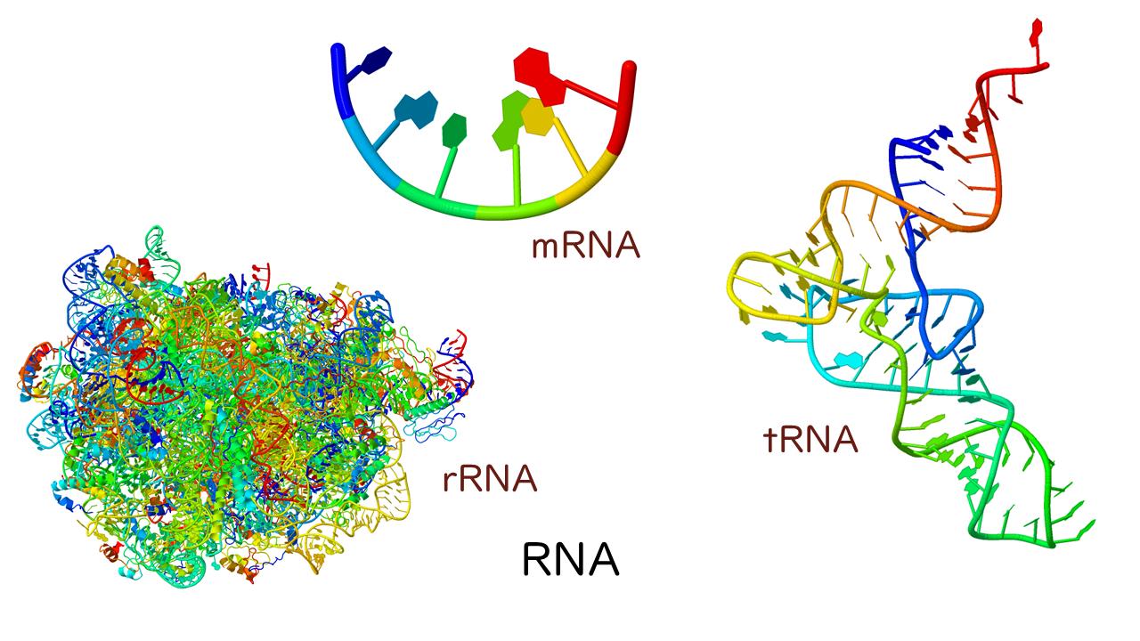 核酸の構造と種類